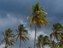 Hurricane approaches as palm trees blow in the wind.